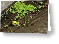 Apple And Algae In Dam Overflow Greeting Card