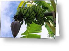 Apple Bananas Greeting Card