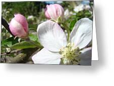 Apple Blossom Artwork Spring Apple Tree Baslee Troutman Greeting Card