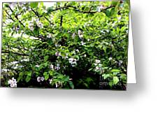 Apple Blossom Digital Painting Greeting Card