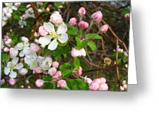 Apple Blossom Pink Greeting Card