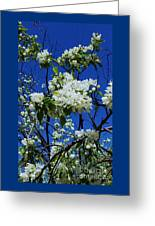 Apple Blossoms # 2 Greeting Card