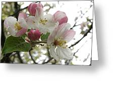 Apple Blossoms - Wild Apple Greeting Card