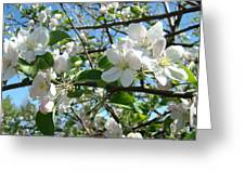 Apple Blossoms Art Prints 60 Spring Apple Tree Blossoms Blue Sky Landscape Greeting Card
