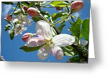 Apple Blossoms Art Prints Blue Sky Spring Baslee Troutman Greeting Card