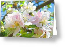 Apple Blossoms Art Prints Spring Trees Baslee Troutman Greeting Card