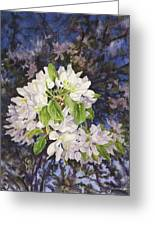 Apple Blossoms At Dusk Greeting Card