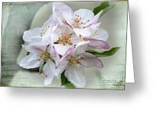 Apple Blossoms From My Hepburn Garden Greeting Card