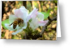 Apple Blossoms With Honey Bee Greeting Card