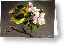 Apple Blossomss Greeting Card