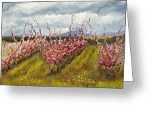 Apple Hill Springtime Greeting Card