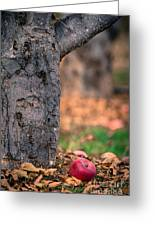 Apple Not Far From Tree Greeting Card
