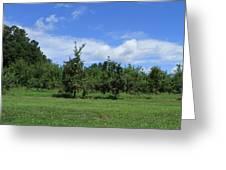 Apple Orchard At Vineyard Greeting Card