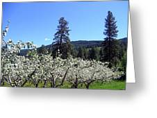 Apple Orchard In Bloom Greeting Card