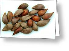 Apple Seeds Greeting Card