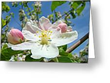 Apple Tree Blossom Art Prints Springtime Nature Baslee Troutman Greeting Card