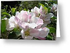 Apple Tree Blossoms Art Prints Baslee Troutman Greeting Card