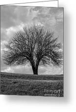 Apple Tree Bw Greeting Card