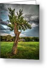 Apple Tree, Hillcrest Park Greeting Card