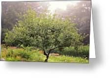 Apple Tree In The Garden Greeting Card