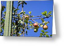 Apple Tree With Apples And Flowers. Amazing Nature Greeting Card