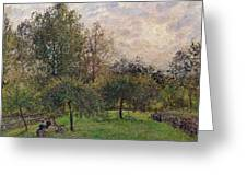 Apple Trees And Poplars In The Setting Sun Greeting Card by Camille Pissarro