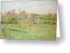 Apple Trees At Gragny Greeting Card by Camille Pissarro