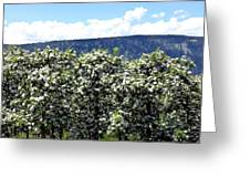 Apple Trees In Bloom     Greeting Card