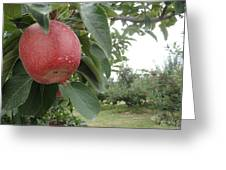 Apples 101010 Greeting Card
