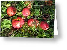 Apples From My Garden Greeting Card
