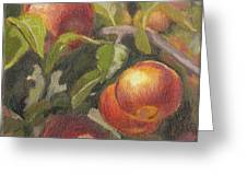 Apples In The Orchard Greeting Card