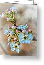 Apples In The Spring Greeting Card