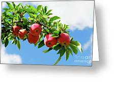 Apples On A Branch Greeting Card