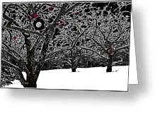 Apples Trees In Winter Greeting Card
