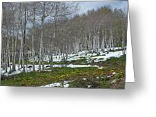 Approaching Spring In The Aspen Forest Greeting Card by Cascade Colors