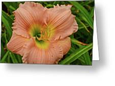 Apricot Day Lily Greeting Card