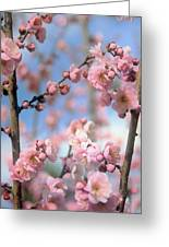 Apricot Tree Blossoms Greeting Card