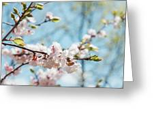 Apricots Bloom Greeting Card