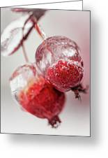 April Ice Storm Apples Greeting Card