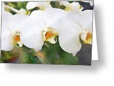Aqua Lilies Greeting Card