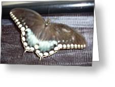 Aqua Wings Greeting Card