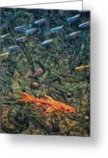 Aquarium 2 Greeting Card by James W Johnson