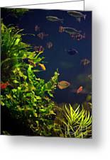 Aquarium Fish And Plants In Zoo Greeting Card
