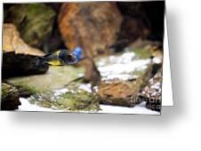 Aquarium Fish At Stones Arrangement Greeting Card