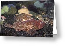 Aquarium Fish Greeting Card