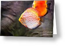 Aquarium Orange Spotted Fish Greeting Card