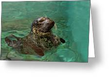 Aquarium Seal  Greeting Card