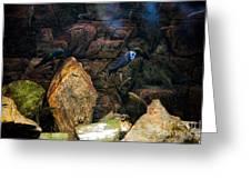 Aquarium Stones Arrangement Greeting Card
