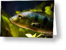 Aquarium Striped Fish Portrait Greeting Card