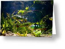 Aquarium Striped Fishes Group Greeting Card